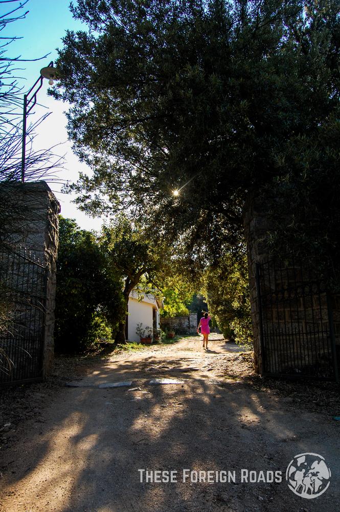 Nuero Farm