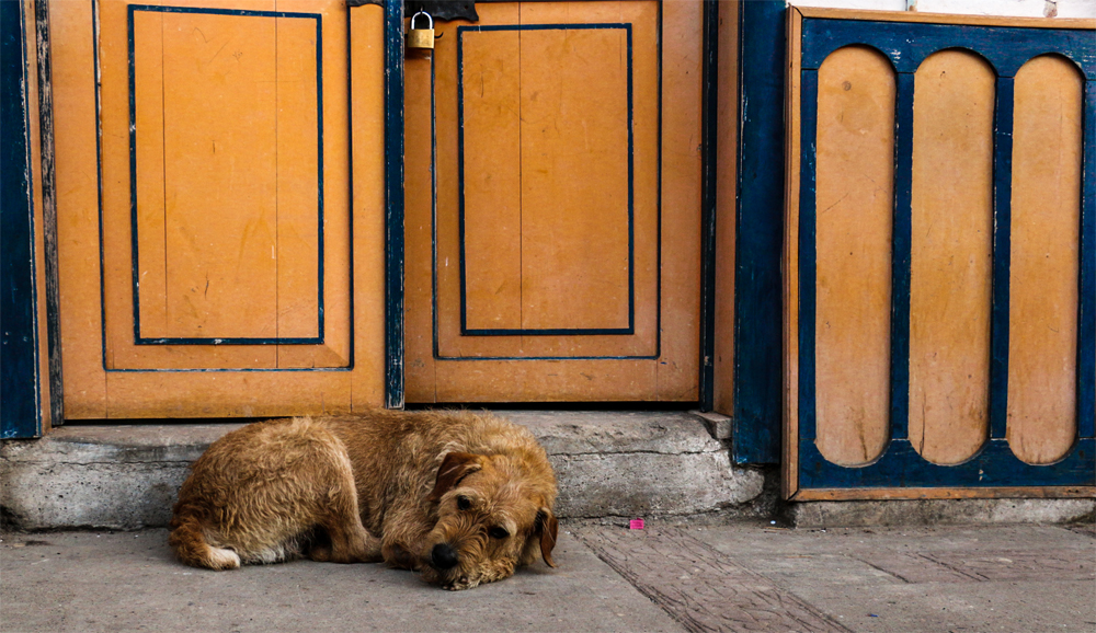 A scruffy dog sits on the sidewalk beside an orange and blue wall.