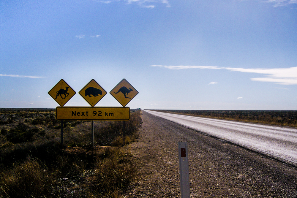 Along a paved highway in the desert, three animal-crossing signs are shown.
