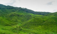 The Cameron Highlands of Malaysia