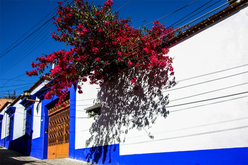 A dark blue and bright white building with red flowers on a tree overhanging