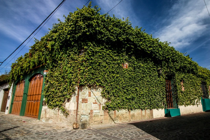 A building covered in vines