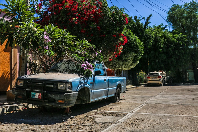 A dirty blue pickup truck sits under a green tree