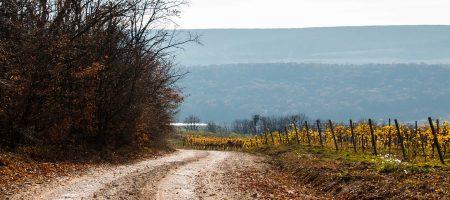 Experience a Moldova Wine Tour