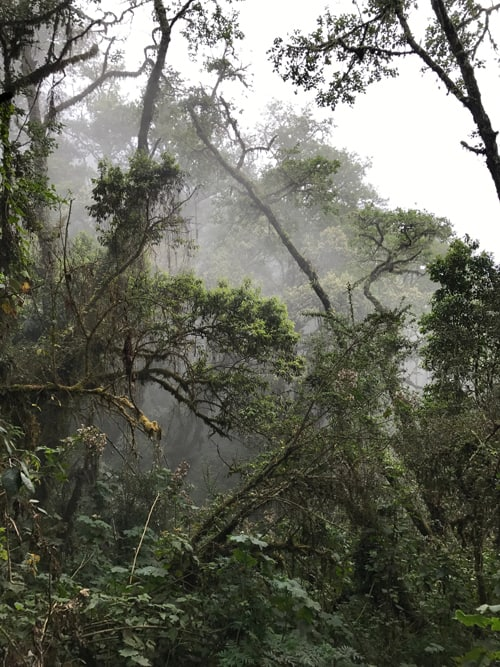 A dense, fog filled jungle surrounding San Pedro la Laguna