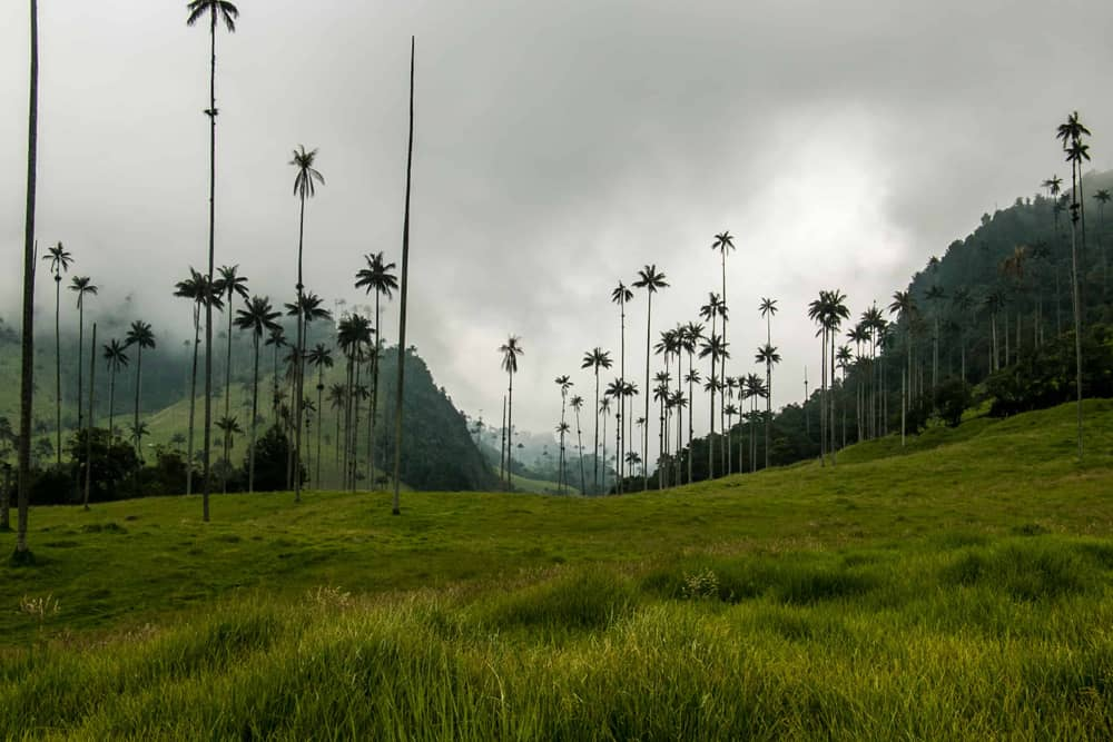 Grey, cloudy sky over a bright green valley with towering palm trees in Salento Colombia