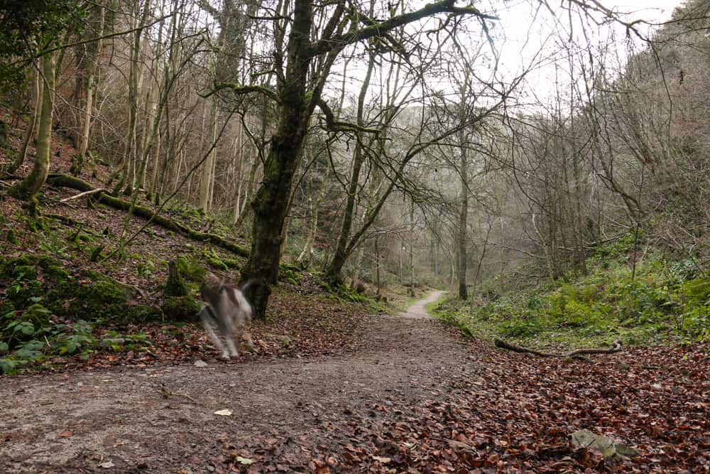 A blurry dog runs down a path in Bristol United Kingdom