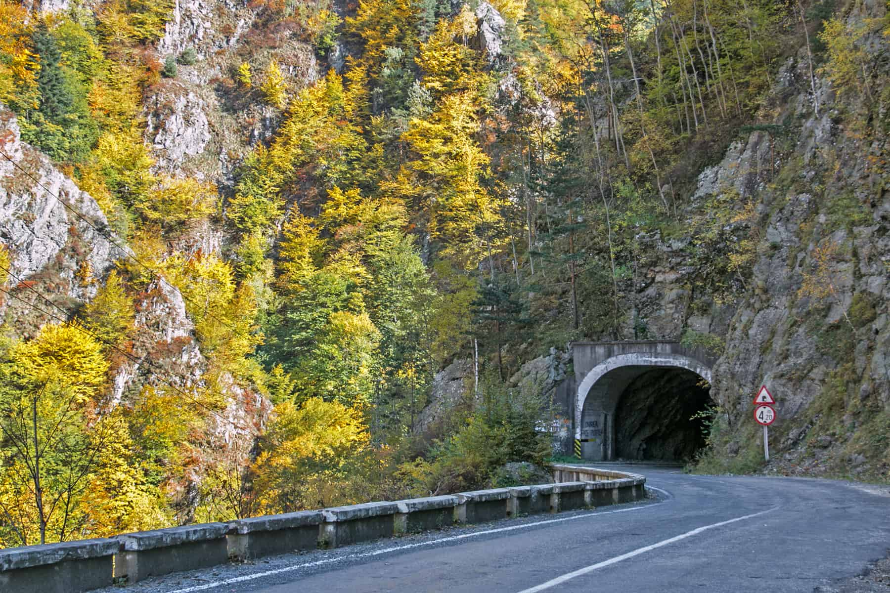 A road enters a tunnel through a mountain covered in colourful trees