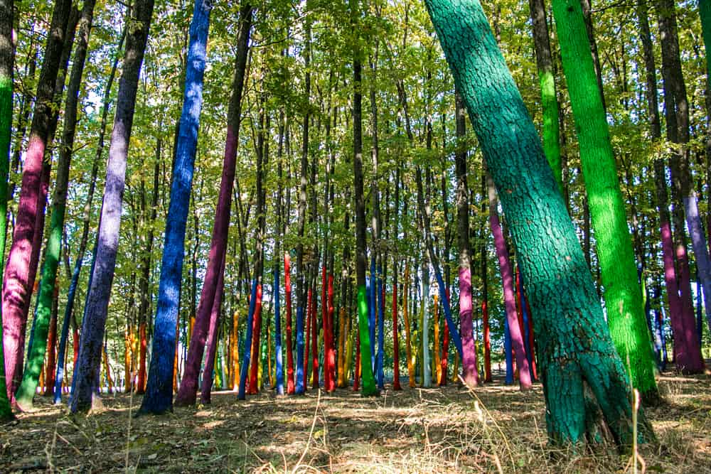 Tree trunks painted many different colours in a forest