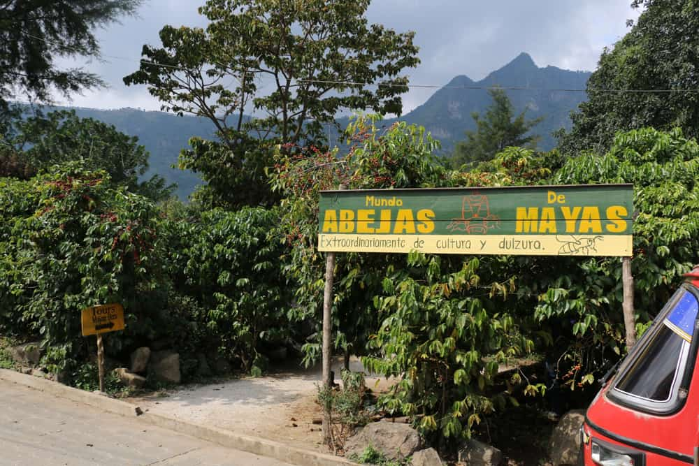 Yellow and green sign with bushes behind it. Stingless bee tour in Guatemala.