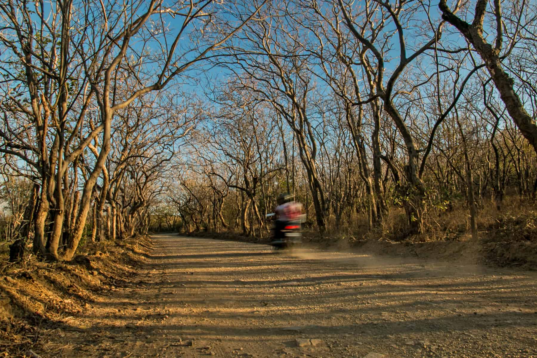 Motorcycle driving down a dirt road surrounded by leafless trees