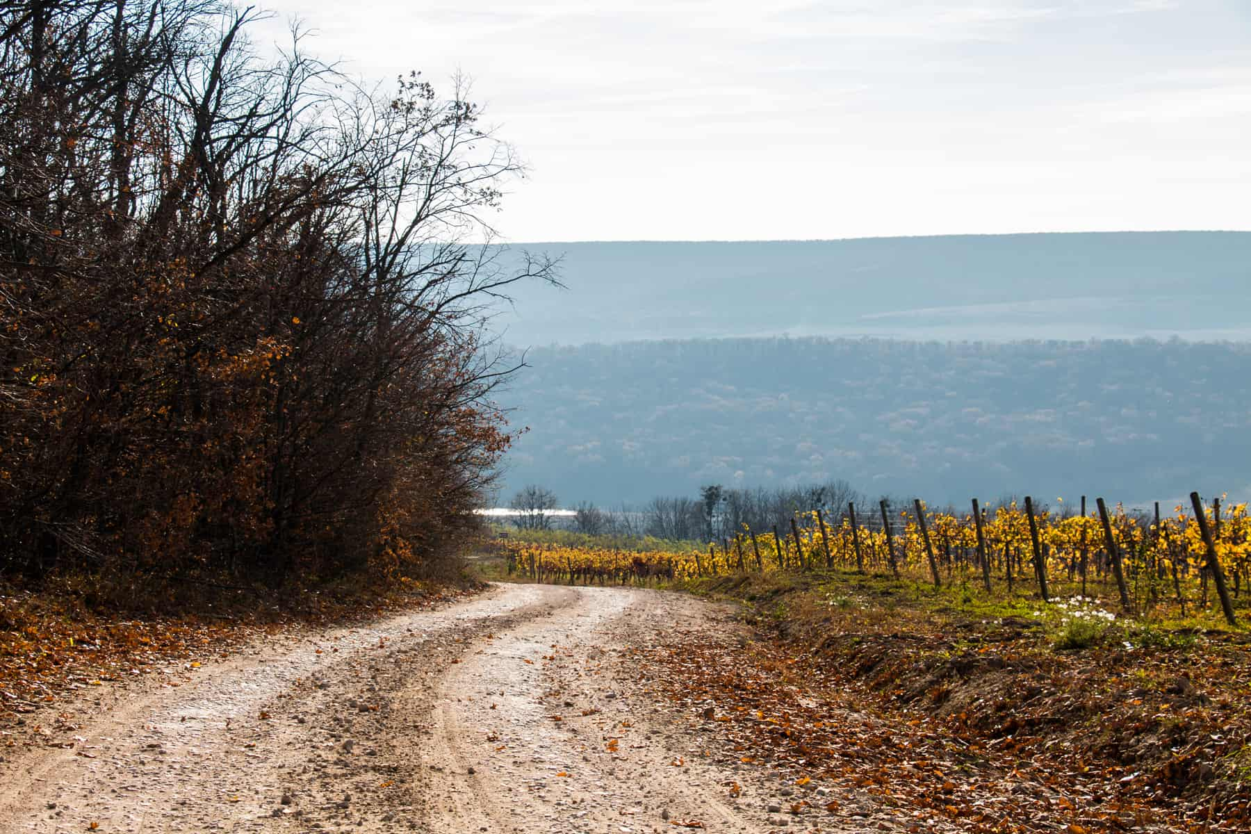 Gravel road passing trees and a vineyard at a winery in Moldova