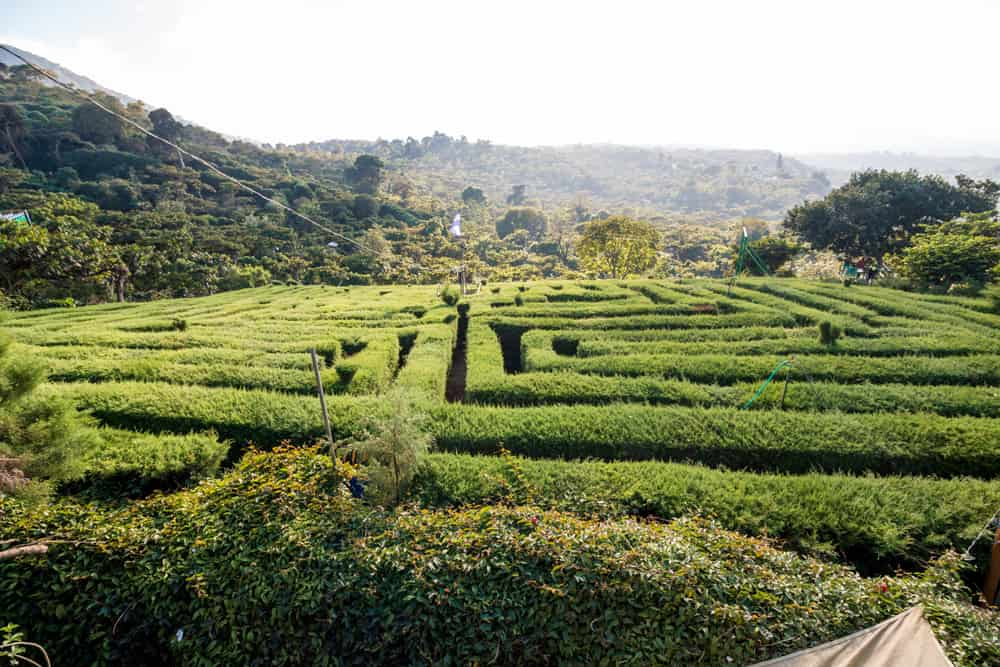 A maze cut from natural hedges with hills in the background