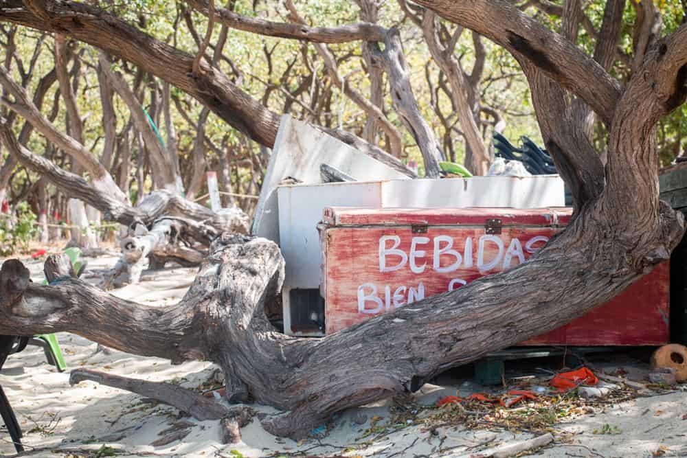 Old rusty fridge behind the trunk of a tree at Bahia Concha Santa Marta Colombia