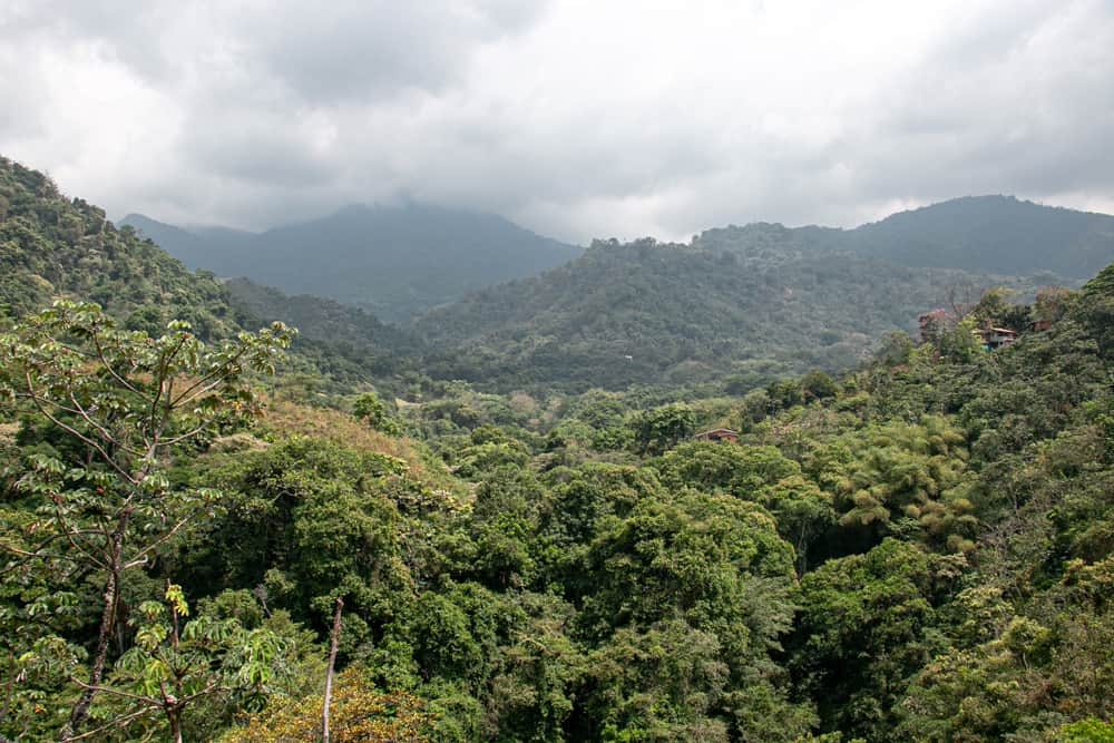 Overlooking dense jungle with a cloudy sky