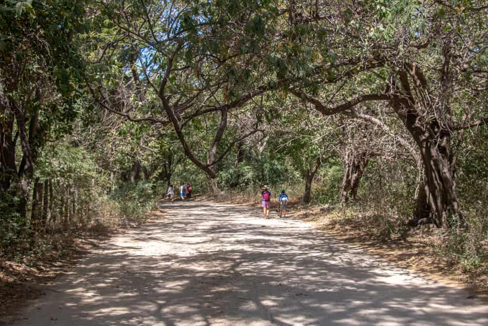 People walking along a dirt road under trees