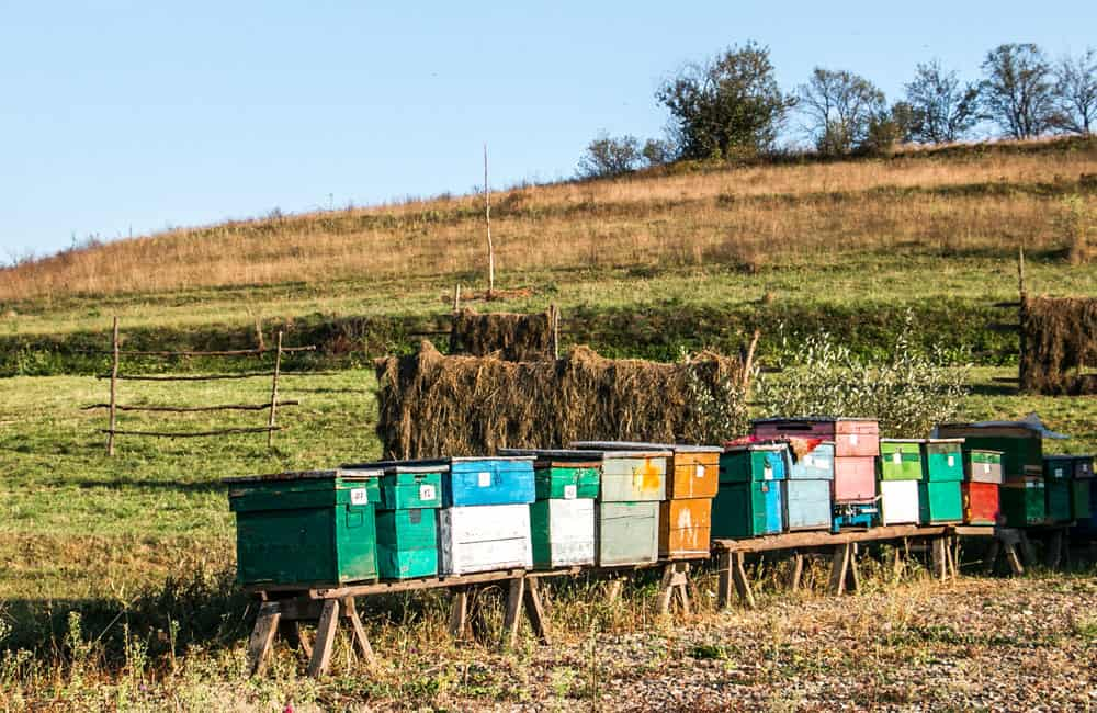 Several colourfully painted bee hives sit in a field in Maramures
