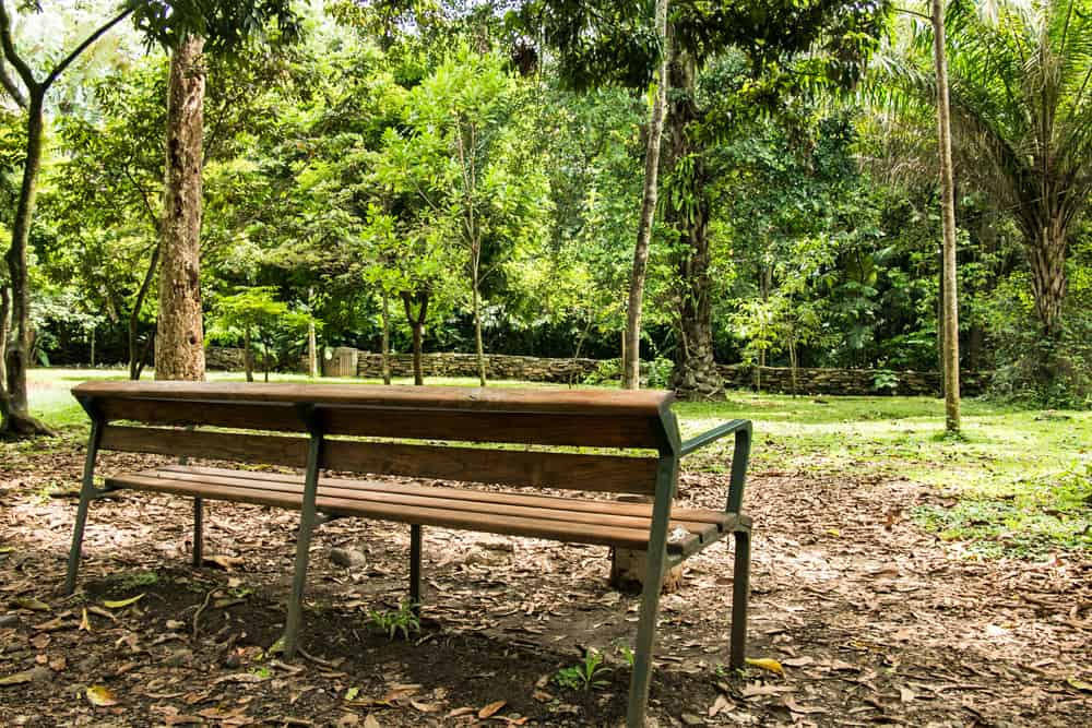 Brown bench in a park with trees