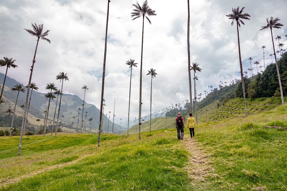 Two people hiking between palm trees