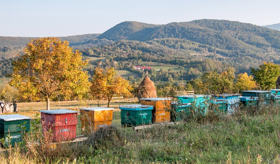 Colourful bee hives in a field
