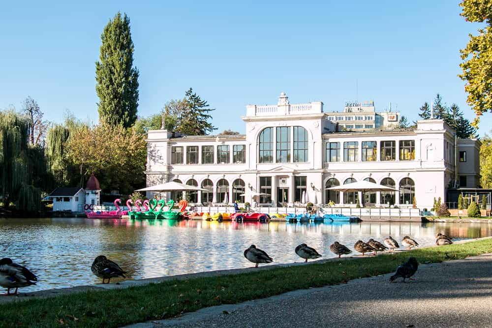 A pond in Cluj with ducks on the edge. Paddle boats and a white buildings are in the background.