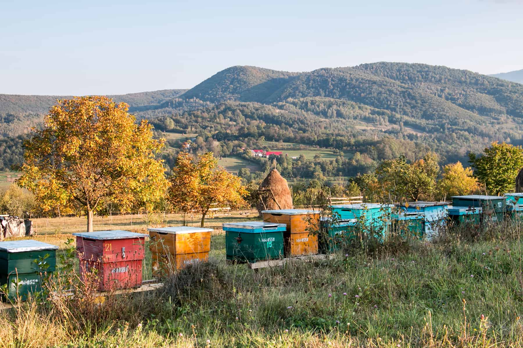 Colourful bee hives in a field in Maramures Romania